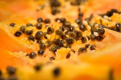Primer de la papaya Fotografía de archivo
