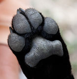 Primer de la pata del perrito Foto de archivo
