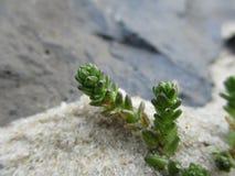 Primer de la pequeña planta en la arena Imagen de archivo