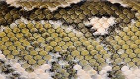 Primer de la piel de serpiente del manditra de la boa, madagascariensis de Sanzinia fotos de archivo