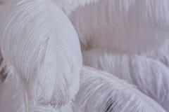 Primer de la pila de plumas mullidas blancas Imágenes de archivo libres de regalías