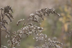 Primer de la planta de Brown en otoño en Forest Preserve Imagenes de archivo