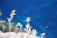 Primer de la planta de la montaña con el mar jónico en el fondo Angelokastro en la isla de Corfú, Grecia Imágenes de archivo libres de regalías