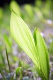 Primer de la planta verde Fotografía de archivo