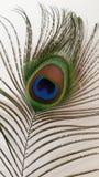 Primer de la pluma del pavo real Fotografía de archivo