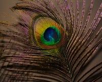 Primer de la pluma del pavo real Imagenes de archivo