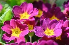 Primer de la primavera hermosa en jardín Fotos de archivo libres de regalías