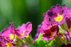 Primer de la primavera hermosa en jardín Imagenes de archivo