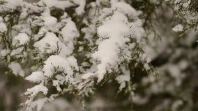 Primer de la rama de árbol nevada en el bosque almacen de metraje de vídeo