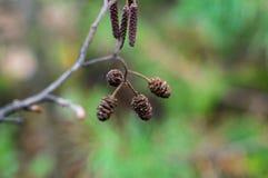 Primer de la rama del otoño Foto de archivo libre de regalías