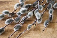 Primer de la rama del sauce de gatito en el fondo de madera del color medio, visión superior, humor de la primavera Fotografía de archivo