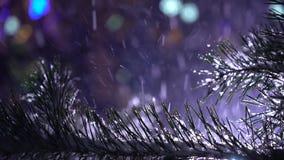 Primer de la rama nevosa de la picea con la nieve que cae del cielo nocturno en fondo almacen de metraje de vídeo