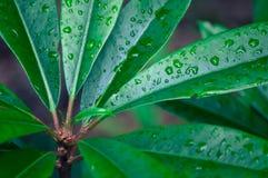 Primer de la rama y de las hojas cubiertas con las gotitas de agua fotos de archivo