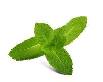 Primer de la ramita brillante fresca de la menta aislada en el fondo blanco Menta verde colorida para los cócteles y las bebidas  Fotografía de archivo libre de regalías