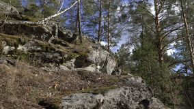 Primer de la roca musgo-cubierta almacen de video