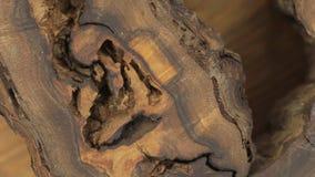 Primer de la rotación de una textura muy inusual de la madera de la nuez Vacío, agujeros, grietas almacen de video