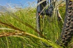 Primer de la rueda de la bicicleta de la montaña en la hierba verde en el prado en el campo Imagenes de archivo