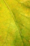 Primer de la textura de la hoja Foto de archivo