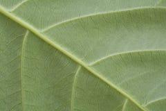 Primer de la textura de la hoja Imagenes de archivo