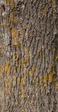 Primer de la textura de madera Fotografía de archivo libre de regalías