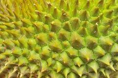Primer de la textura del durian Imagen de archivo libre de regalías