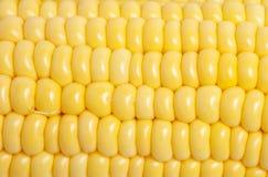 Primer de la textura del maíz Imágenes de archivo libres de regalías