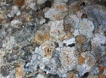 Primer de la textura en una roca fotografía de archivo
