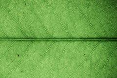 Primer de la textura de la hoja foto de archivo libre de regalías
