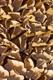 Primer de la tierra seca del desierto Imagenes de archivo