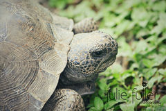 Primer de la tortuga en hierba Fotos de archivo libres de regalías