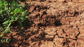 Primer de la vegetación verde en campo del desierto almacen de metraje de vídeo