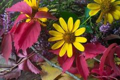 Primer de la vida de las flores y todavía de las hojas de la caída Imagenes de archivo