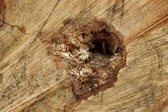 Primer de la vieja textura seccionada transversalmente áspera del fondo del árbol de pino Imagenes de archivo