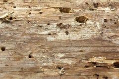 Primer de la vieja textura seccionada transversalmente áspera del fondo del árbol de pino Fotografía de archivo libre de regalías