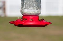 Primer de las abejas de la miel en alimentador Imagen de archivo libre de regalías