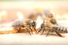 Primer de las abejas que comen la miel Fotos de archivo