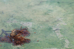 Primer de las bacterias del géiser Fotografía de archivo