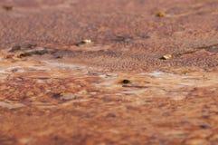 Primer de las bacterias del géiser Foto de archivo libre de regalías