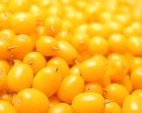 Primer de las bayas espino amarillas Foto de archivo libre de regalías