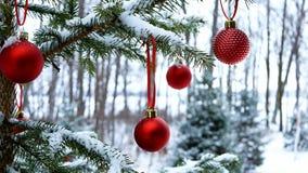 Primer de las bolas rojas de las chucherías de la Navidad que cuelgan en ramas de árbol nevadas afuera metrajes