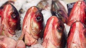 Primer de las cabezas de los pescados en el departamento de los pescados en el contador almacen de video