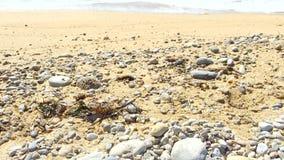 Primer de las conchas marinas y de las rocas que inclinan para arriba hacia el mar dinámico de la turquesa almacen de video