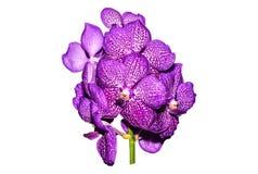 Primer de las flores de las orquídeas en jardín Fotografía de archivo