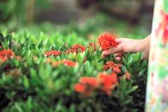 Primer de las flores del punto del flor con la mano de la muchacha borrosa fotografía de archivo libre de regalías