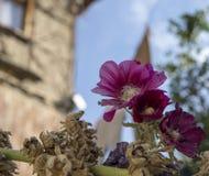 Primer de las flores púrpuras de la melcocha con una casa turca histórica borrosa del adobe en el fondo imágenes de archivo libres de regalías