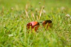 Primer de las gafas de sol en un césped verde Fotografía de archivo