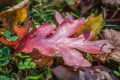 Primer de las hojas coloridas de la caída en la tierra fotos de archivo libres de regalías