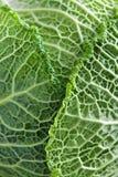 Primer de las hojas de la col verde Imagen de archivo libre de regalías
