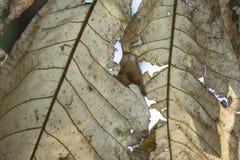 Primer de las hojas de palma Imagenes de archivo