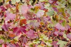 Primer de las hojas de otoño Imágenes de archivo libres de regalías